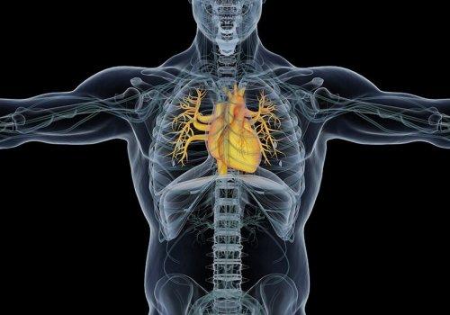 Cardiac MRI Accurately Identifies Fatal Heart Disease